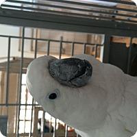 Adopt A Pet :: Pretty Boy - Punta Gorda, FL