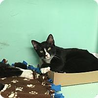 Adopt A Pet :: Axel - Rockaway, NJ