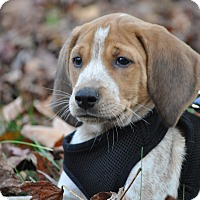 Adopt A Pet :: Garth - Chesapeake, VA