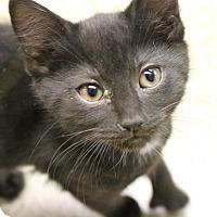 Adopt A Pet :: Gilbert - Medina, OH