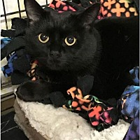 Adopt A Pet :: Luna - New Richmond,, WI