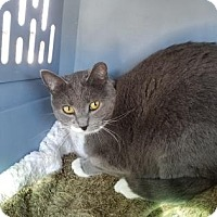 Adopt A Pet :: Safe 7 - Tucson, AZ