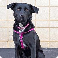 Adopt A Pet :: Echo D3301 - Shakopee, MN