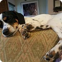 Adopt A Pet :: Sara - Ogden, UT