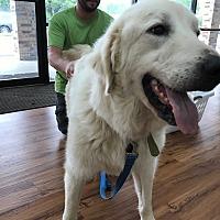 Adopt A Pet :: Ella - Kyle, TX