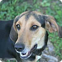 Adopt A Pet :: Brandi Joe - Lufkin, TX