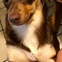 Adopt A Pet :: Lois - Colton, CA