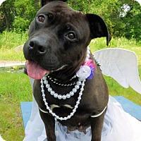 Adopt A Pet :: Rhenna - Catasauqua, PA