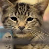 Adopt A Pet :: Butch Cassidy - Herndon, VA