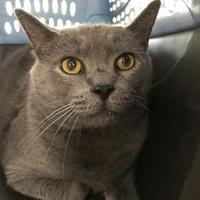 Adopt A Pet :: Yoda - Cincinnati, OH