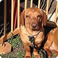 Adopt A Pet :: Heidi - Plainfield, IL