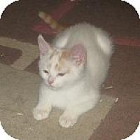 Adopt A Pet :: K-Sissy1-Zeus - Colorado Springs, CO
