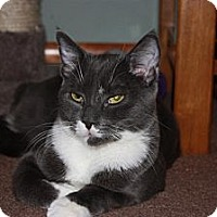 Adopt A Pet :: Brutus (LE) - Little Falls, NJ