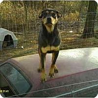 Adopt A Pet :: Whiskey - Emory, TX
