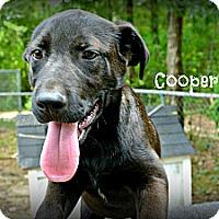 Adopt A Pet :: Cooper - Vancleave, MS