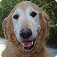 Adopt A Pet :: Dusty - Foster, RI