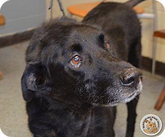 Labrador Retriever Mix Dog for adoption in Eighty Four, Pennsylvania - Layla