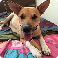Adopt A Pet :: Effie - Los Angeles, CA