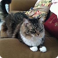 Adopt A Pet :: Will - Laguna Woods, CA