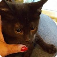 Adopt A Pet :: Violet - McHenry, IL