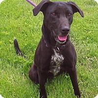 Adopt A Pet :: Juliet - Metamora, IN