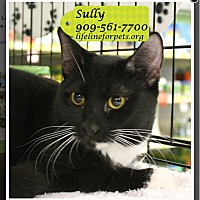 Adopt A Pet :: Sully (Adopted!!) - Monrovia, CA