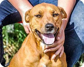 Labrador Retriever Mix Dog for adoption in Joshua, Texas - Lucky