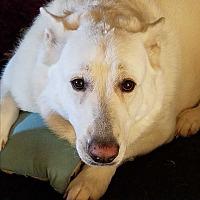 Adopt A Pet :: Zeus - Red Bluff, CA