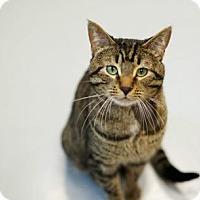 Adopt A Pet :: Lucky - Carroll, IA
