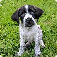 Adopt A Pet :: Jaxx - New Oxford, PA