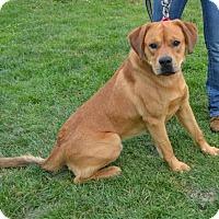 Adopt A Pet :: Denver - Akron, OH