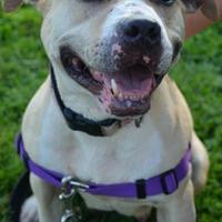 Adopt A Pet :: Justine - Niagara Falls, NY