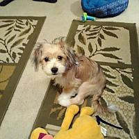 Adopt A Pet :: Graham - ROSENBERG, TX