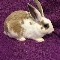 Adopt A Pet :: Brennon - Idaho Falls, ID