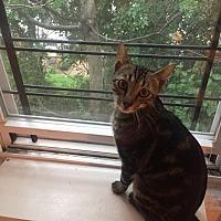 Adopt A Pet :: Putnam - New York, NY