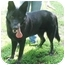 Photo 1 - German Shepherd Dog Dog for adoption in Nesbit, Mississippi - Blake