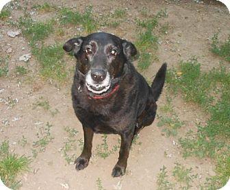 Labrador Retriever Mix Dog for adoption in Elyria, Ohio - Chewie-ES Dog