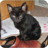 Adopt A Pet :: Snowball #2 - Davis, CA