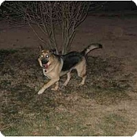 Adopt A Pet :: Zoie - Chandler, IN