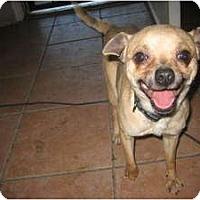 Adopt A Pet :: Buck - Chandler, AZ