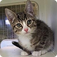 Adopt A Pet :: Cecile - New York, NY