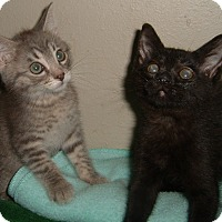 Adopt A Pet :: Fritz - Farmington, AR