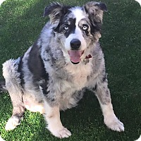 Adopt A Pet :: Howard - Phoenix, AZ