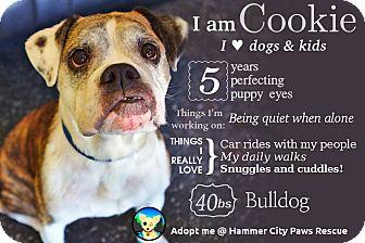 Bulldog Mix Dog for adoption in Hamilton, Ontario - Cookie
