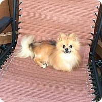 Adopt A Pet :: Rebel - Dallas, TX