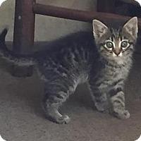 Adopt A Pet :: Junior - Somerset, KY