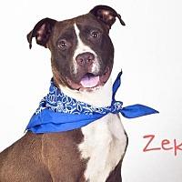 Adopt A Pet :: *ZEKE - Sacramento, CA