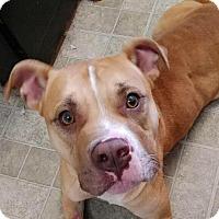 Adopt A Pet :: Lt. Dan - Umatilla, FL