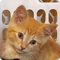 Adopt A Pet :: Cornflake - Geneseo, IL