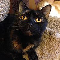 Adopt A Pet :: NIKKA - Ridge, NY